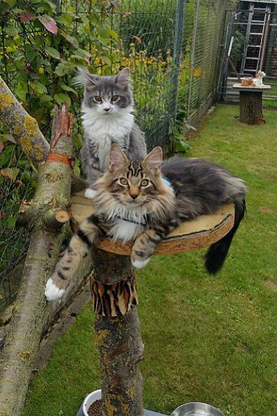 Jaquelines Tierpension mit mit einem Herz für alle Tiere und liebevoller, kompetenter Betreuung Ihrer Katzen, Hunde und Kleintiere.