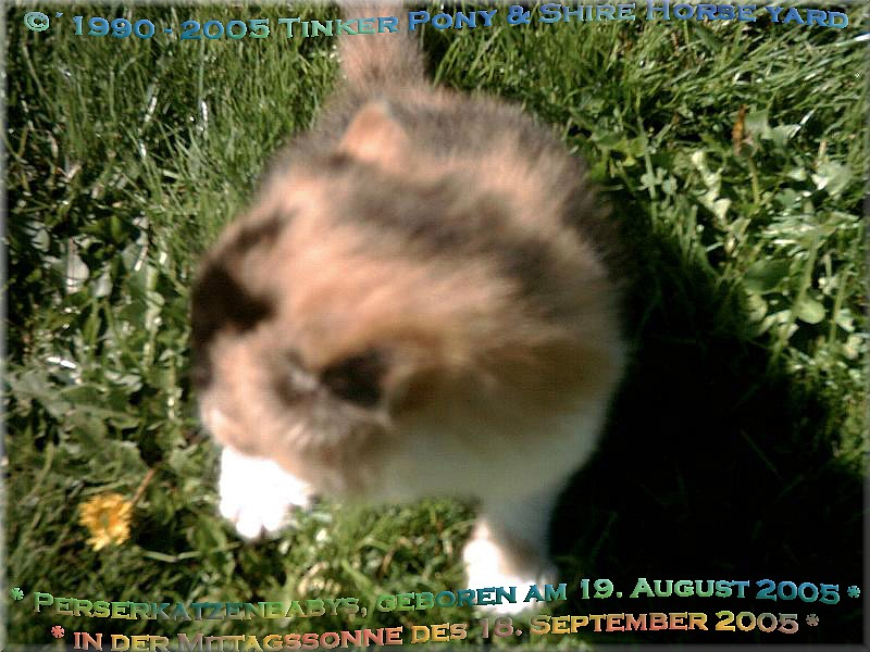 Jaquelines Tierpension mit mit einem Herz für alle Tiere und liebevoller, kompetenter Betreuung Ihrer Katzen und Kleintiere.
