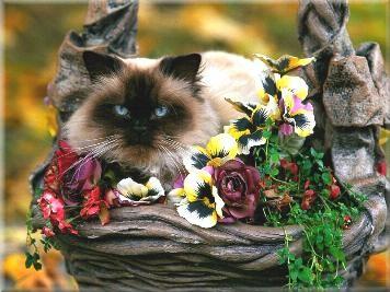 Jaquelines Katzenpension und Tierpension mit mit einem Herz f�r alle Tiere und liebevoller, kompetenter Betreuung Ihrer Katzen und Kleintiere.